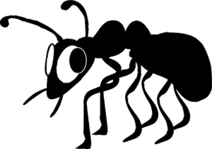 stop termites from damaging your home with brunswick pest control