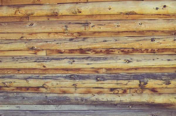 brunswick pest control offers encompassing termite control in wilmington north carolina
